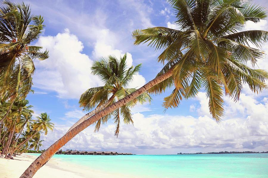 Maldives Photograph - Whispering Palms. Maldives by Jenny Rainbow