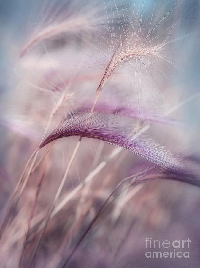 Barley Photograph - Whispers In The Wind by Priska Wettstein