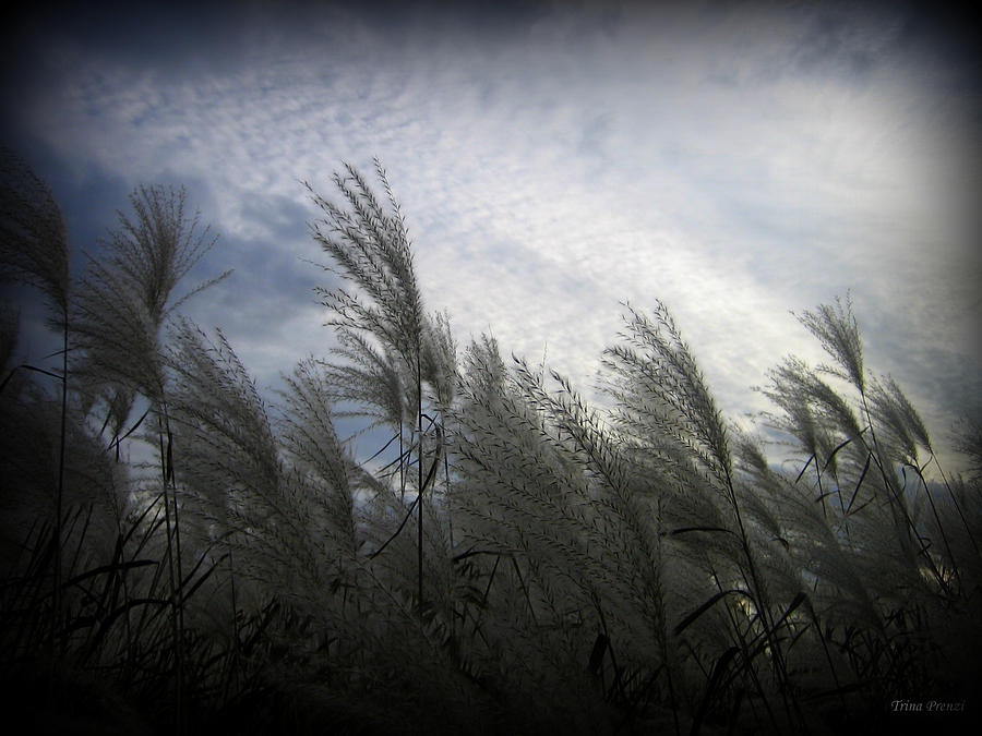 Greeting Card Photograph - Whispers In The Wind by Trina Prenzi