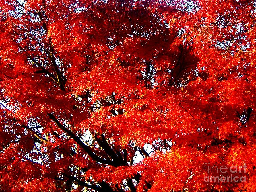 Japanese Photograph - Whispers Of A Japanese Maple by Juliette Carter-MarShall