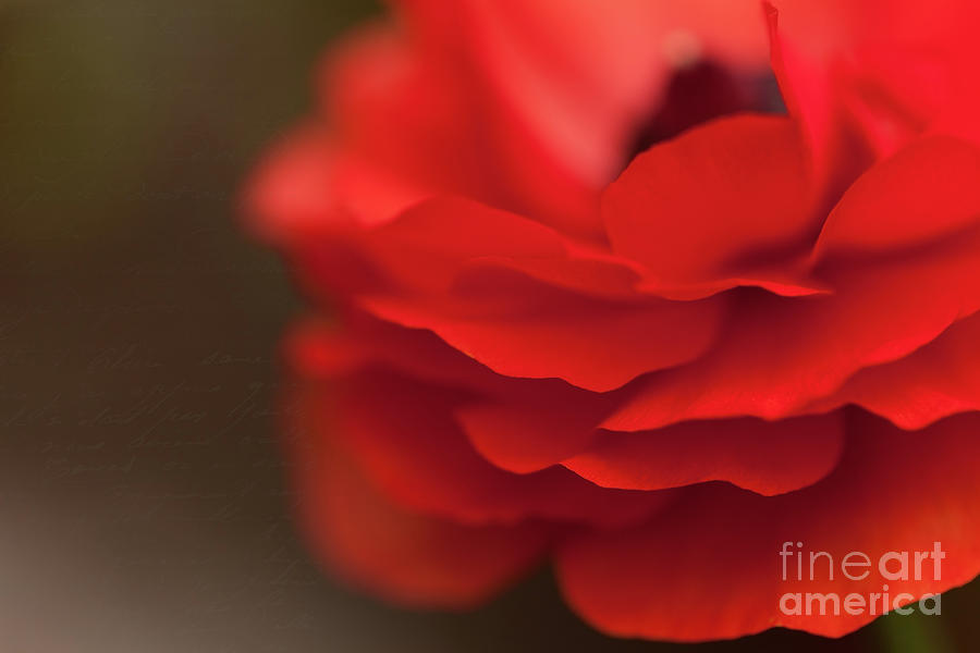Red Photograph - Whispers Of Love by Beve Brown-Clark Photography