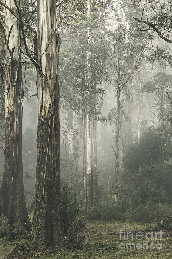 Healesville Photograph - Whist by Andrew Paranavitana