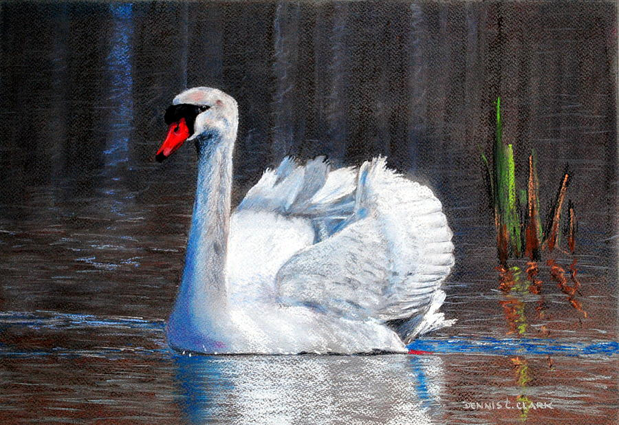 Swan Pastel - White Swan on Lake by Dennis Clark