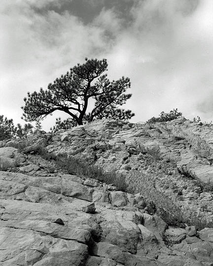 Rock Face Photograph - White Acres Sentinel by Allan McConnell
