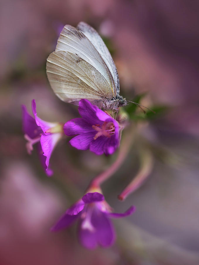 White and green butterfly on pink bell flowers photograph by lonicera photograph white and green butterfly on pink bell flowers by jaroslaw blaminsky mightylinksfo