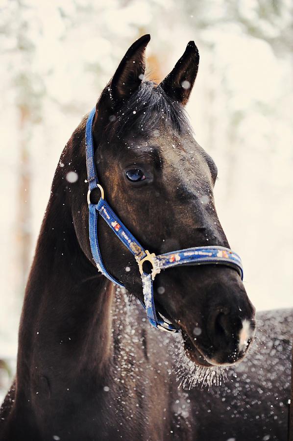 Horse Photograph - White Beard by Jenny Rainbow