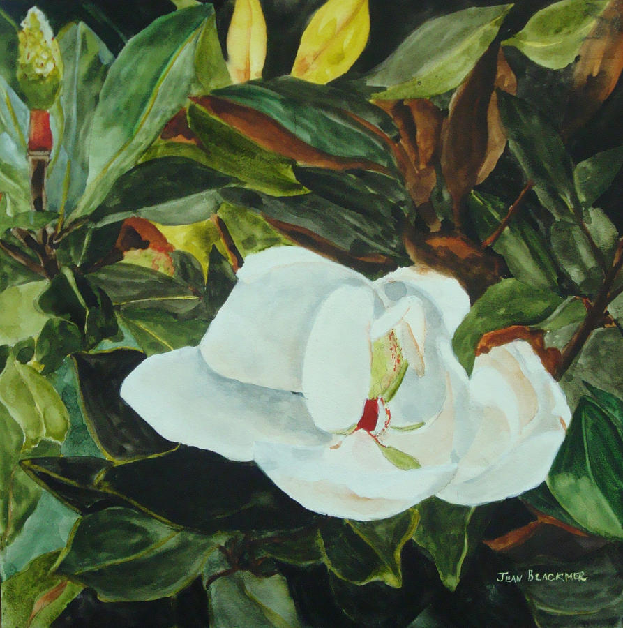 Flower Painting - White Beauty by Jean Blackmer