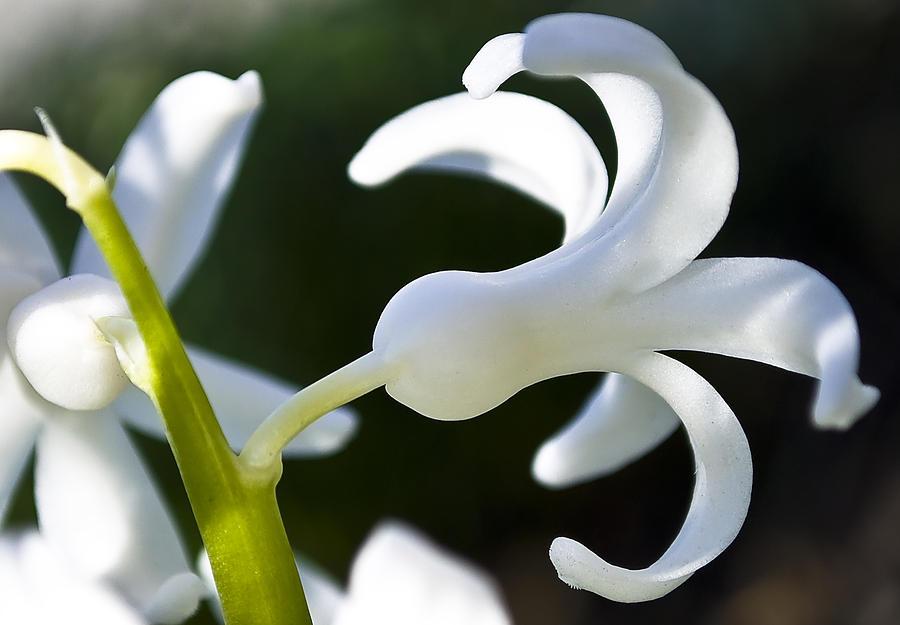 Beautiful Photograph - White Bell by Svetlana Sewell