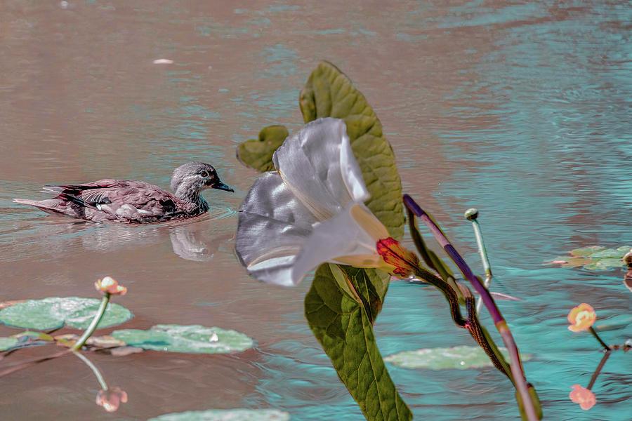 White Bindweed And Mandarin Duck Mix #g5 Photograph