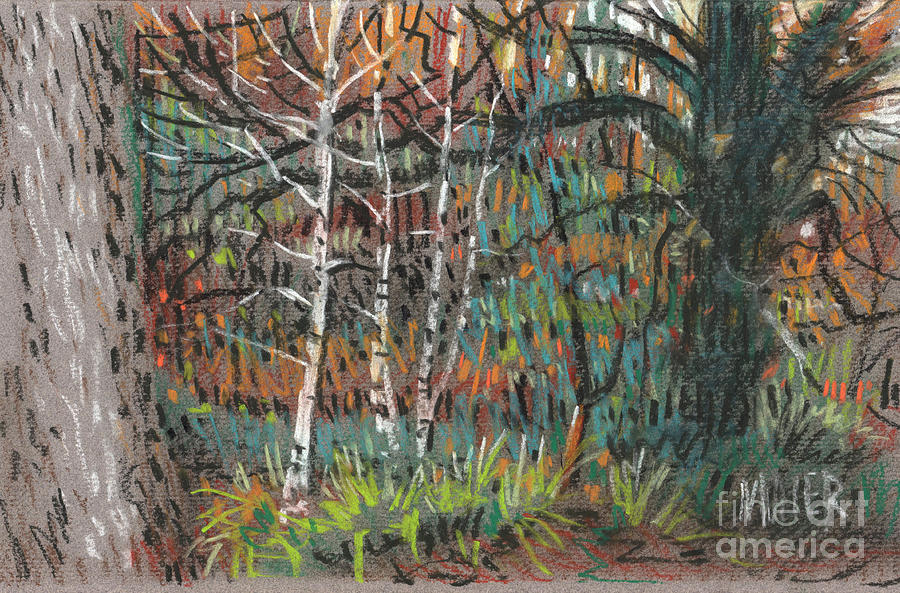 Pastel Drawing - White Birch by Donald Maier