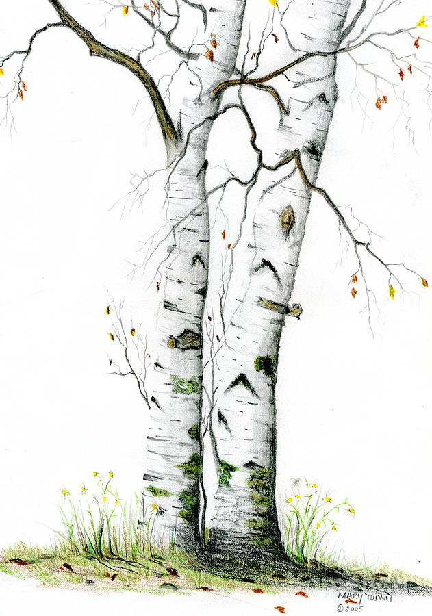 White Birch Painting - White Birch by Mary Tuomi