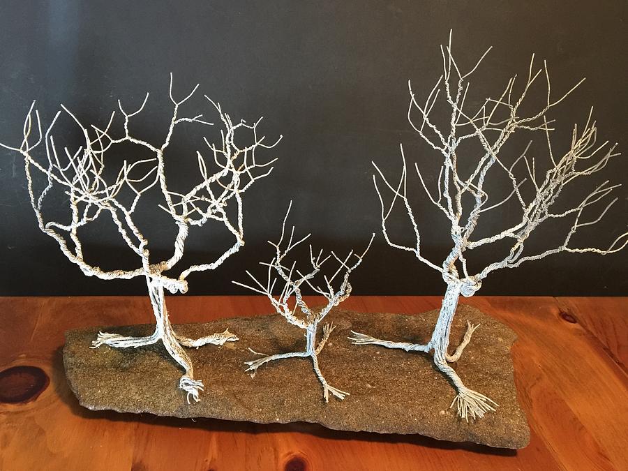 White Birch on Sandstone by Dale Yarmuth