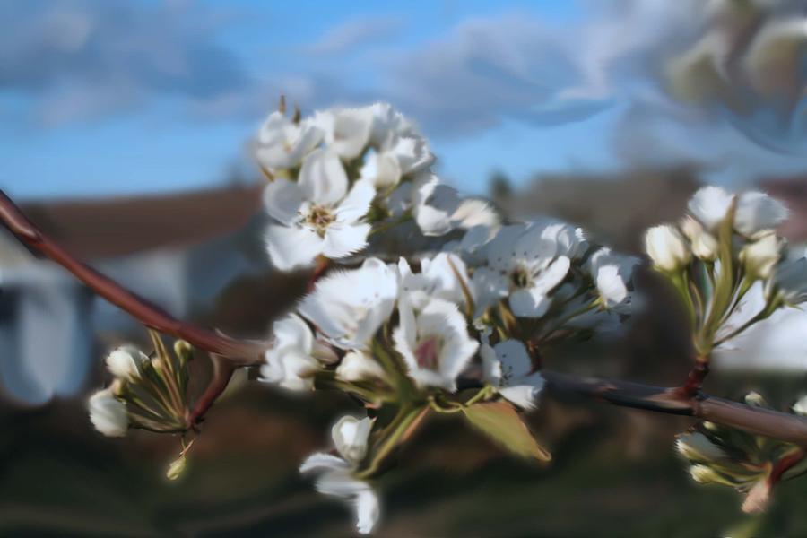 White Blossoms Digital Art by Robert Bewick