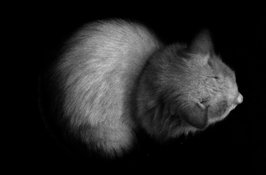 Cat Photograph - White Cat by Publio Furbino