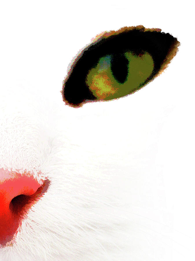 Cats Face Photograph - White Cats Face by Menega Sabidussi