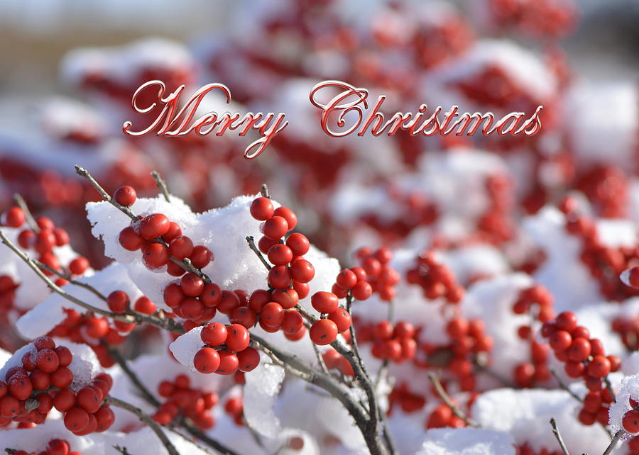 Christmas Card Photograph - White Christmas by Lauren Medina