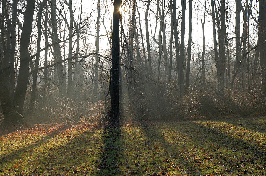 White Clay Creek State Park #05159 by Raymond Magnani