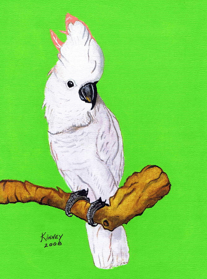 Parrot Painting - White Cockatoo by Jay Kinney