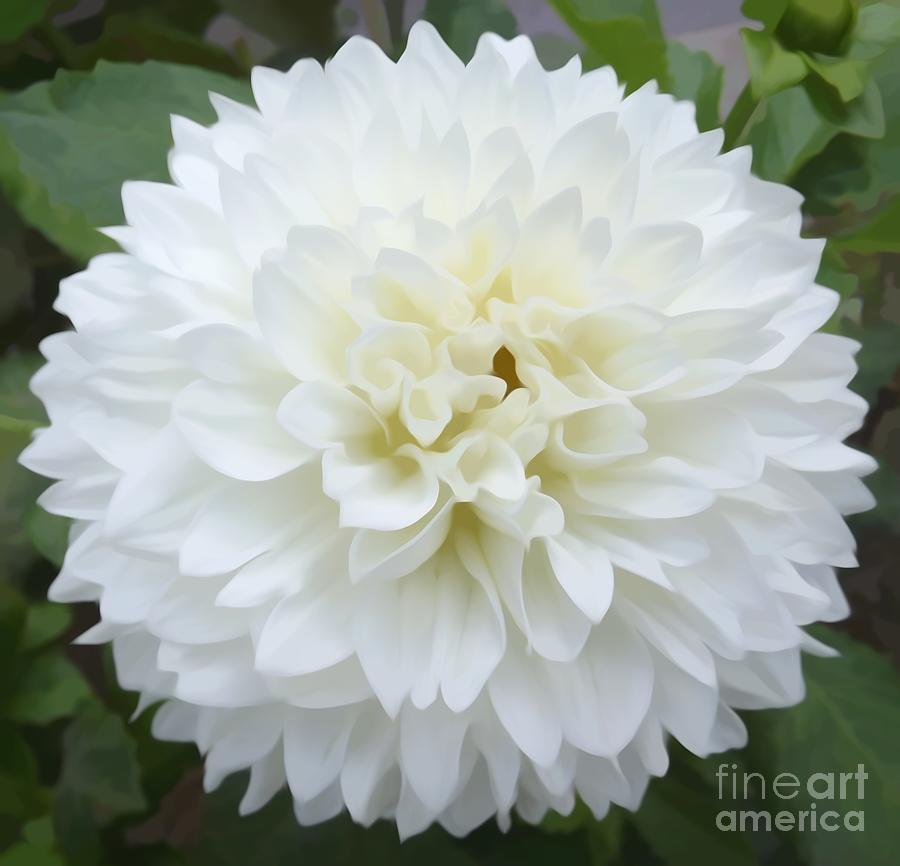 White Dahlia Flower Soft Effect Mixed Media By Rose Santuci Sofranko
