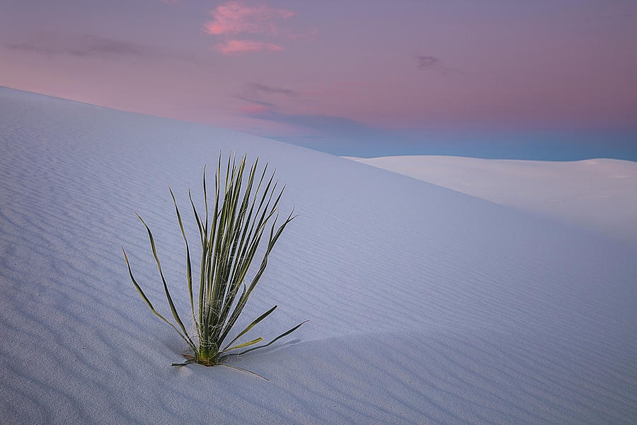 White Photograph - White Dunes by Edgars Erglis