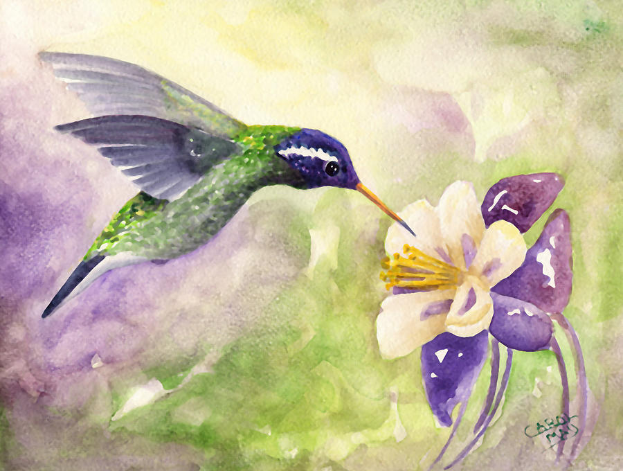 Hummingbird Painting - White-eared Hummingbird by Art by Carol May