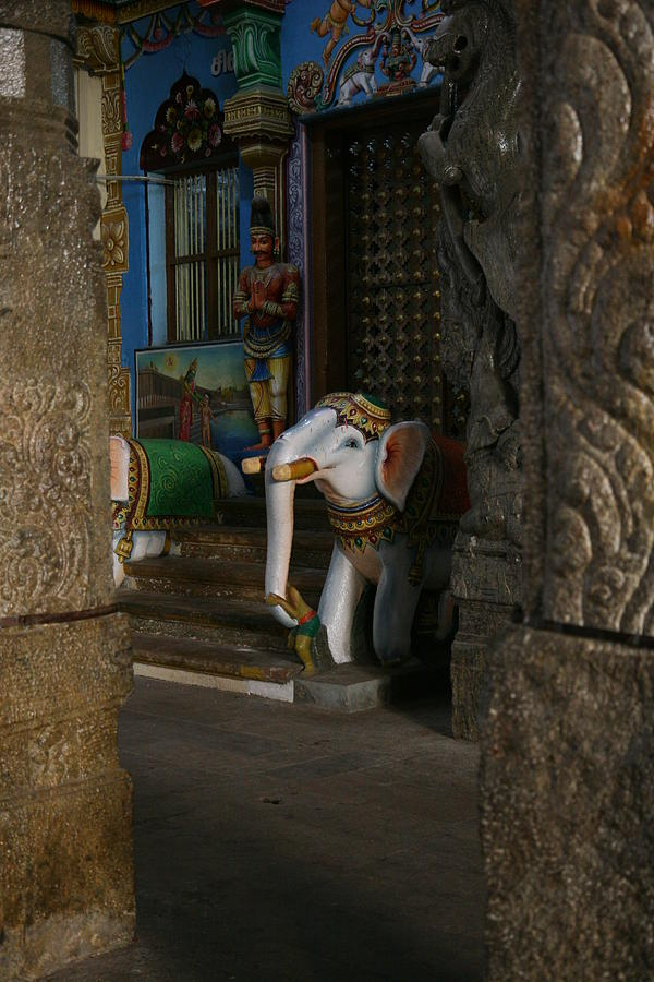 White Elephant Photograph - white Elephant by Deepak Pawar