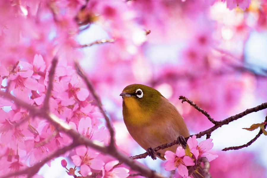 Horizontal Photograph - White Eye Bird by masahiro Makino