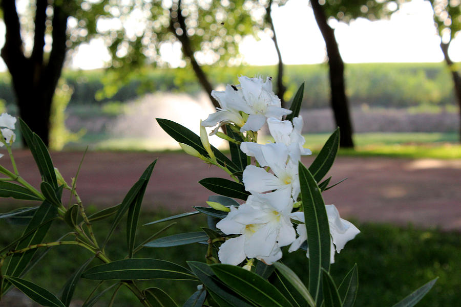 White Flower Digital Art - White Flowe by EmotionalCoaching