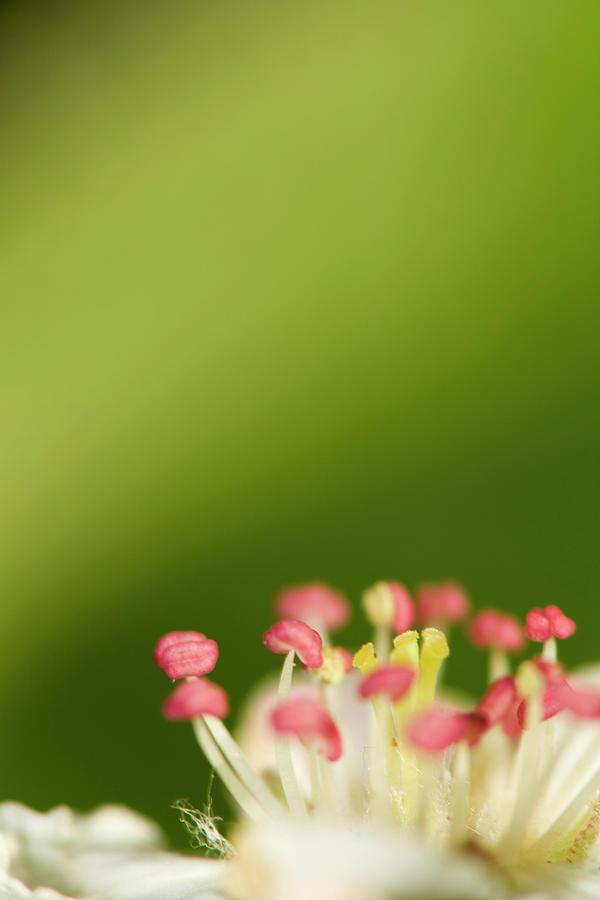 Flower Photograph - White Flower by Jouko Mikkola