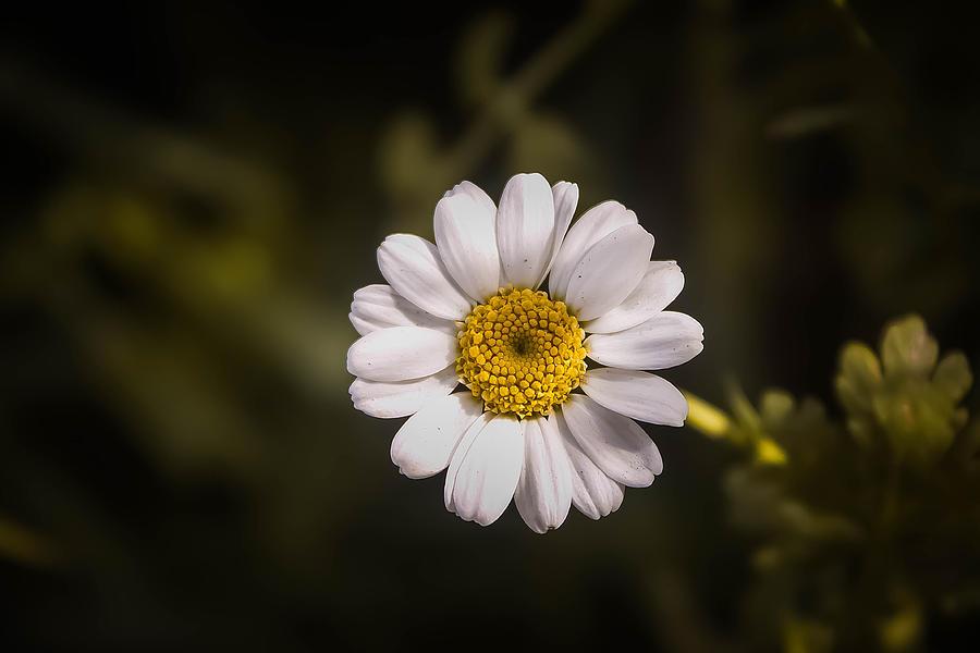 Michelle Saraswati Photograph - White Flower 1 by Michelle Saraswati