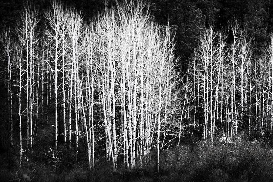 White Forest Night Photograph