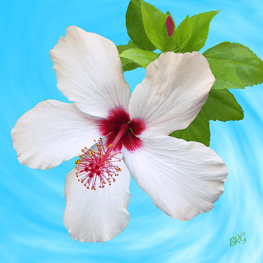 White Hibiscus Good Morning Photograph By Ben And Raisa Gertsberg