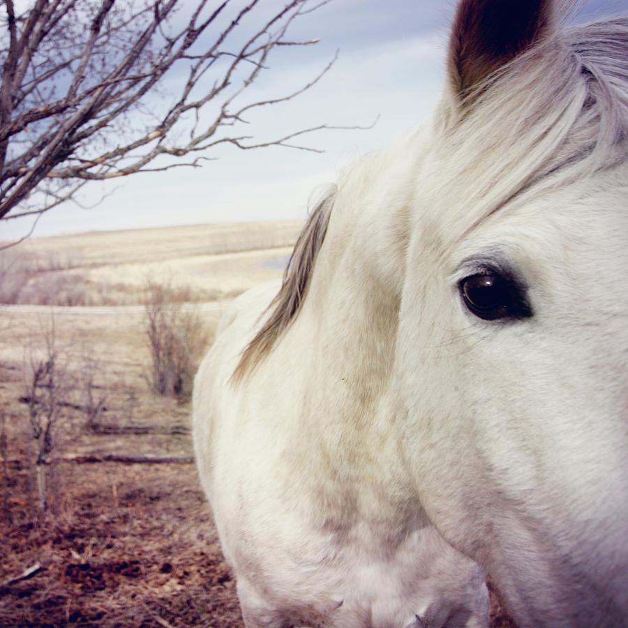 Square Photograph - White Horse Close Up by Lori Andrews