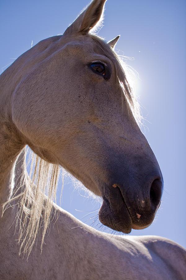 White Photograph - White Horse by Dustin K Ryan