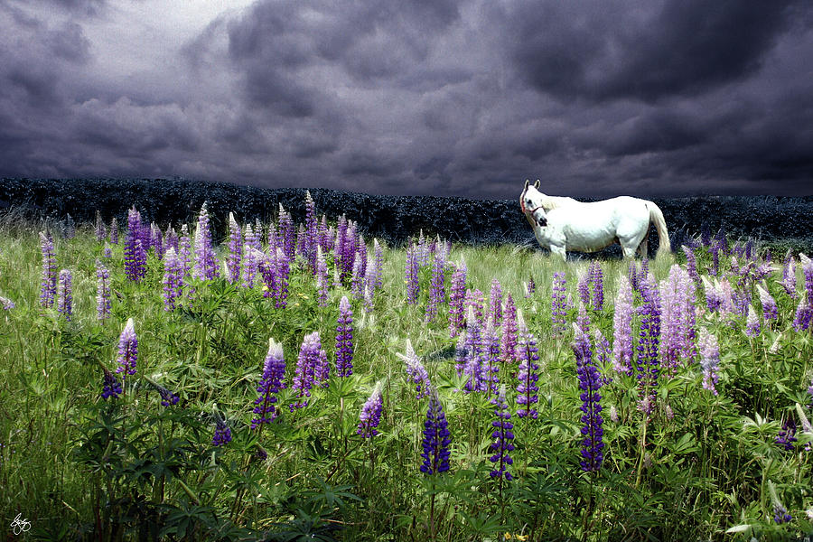 Lupine Photograph - White Horse In A Lupine Storm by Wayne King