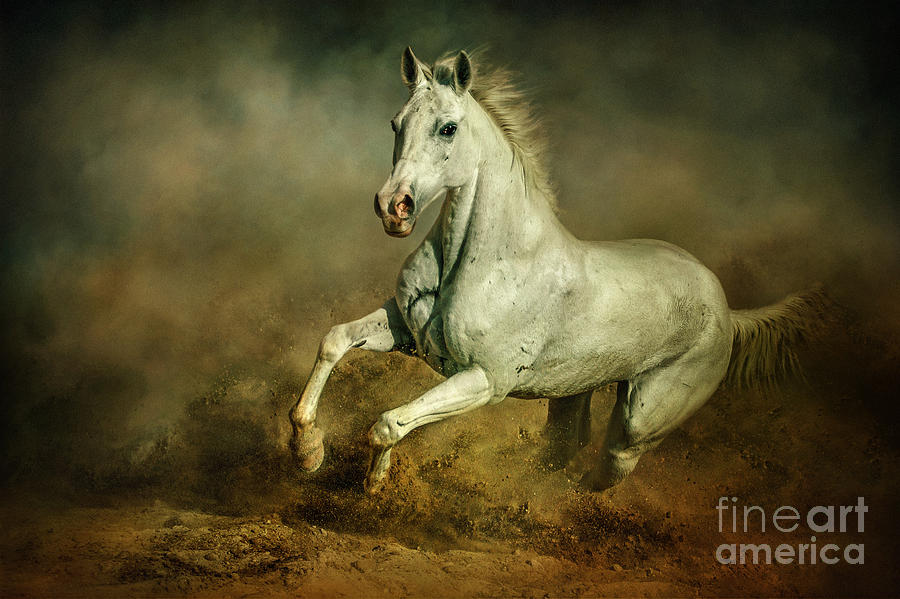 White Horse Running Wild Equestrian Art Photography ...