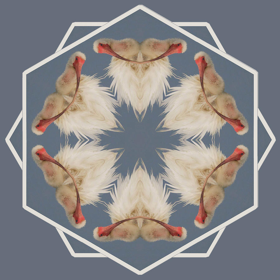 Kaleidoscope Photograph - White Ibis Snowflake by Rhoda Gerig
