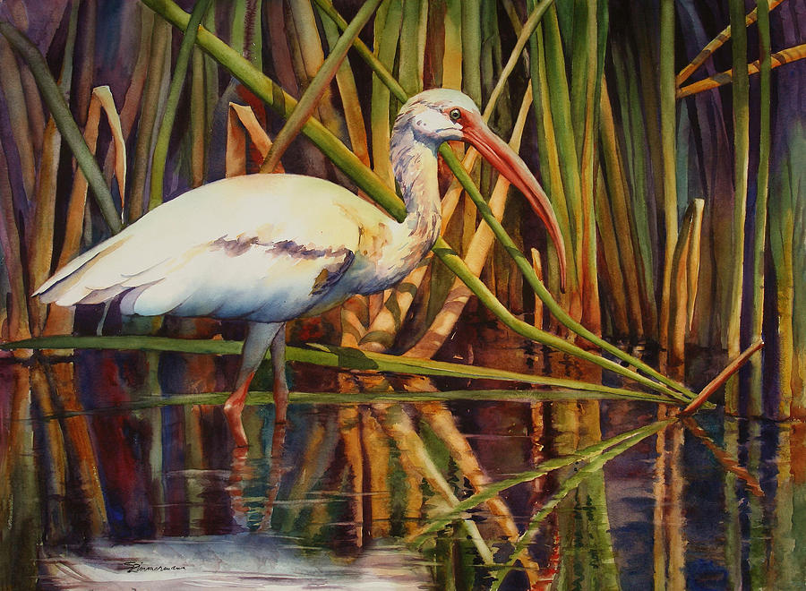 Ibis Painting - White Ibis by Sue Zimmermann