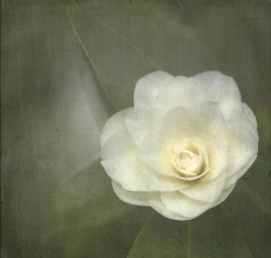 White Photograph - White In The Corner by Rebecca Cozart