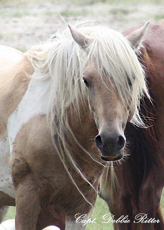 Stallion Photograph - White Lightening by Captain Debbie Ritter