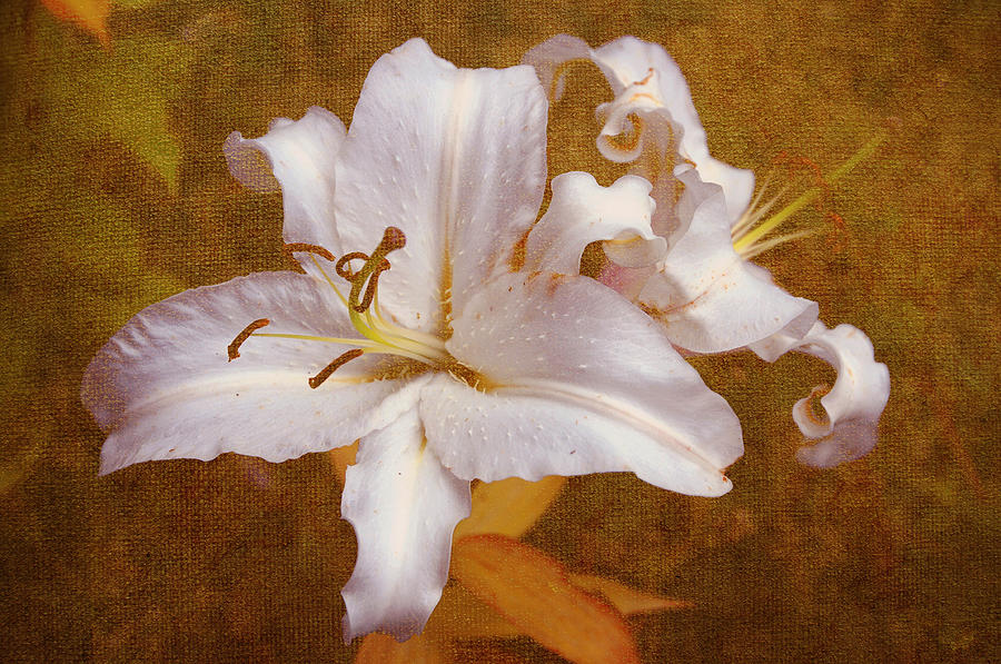 Lily Photograph - White Lilies. Time To Be Romantic by Jenny Rainbow