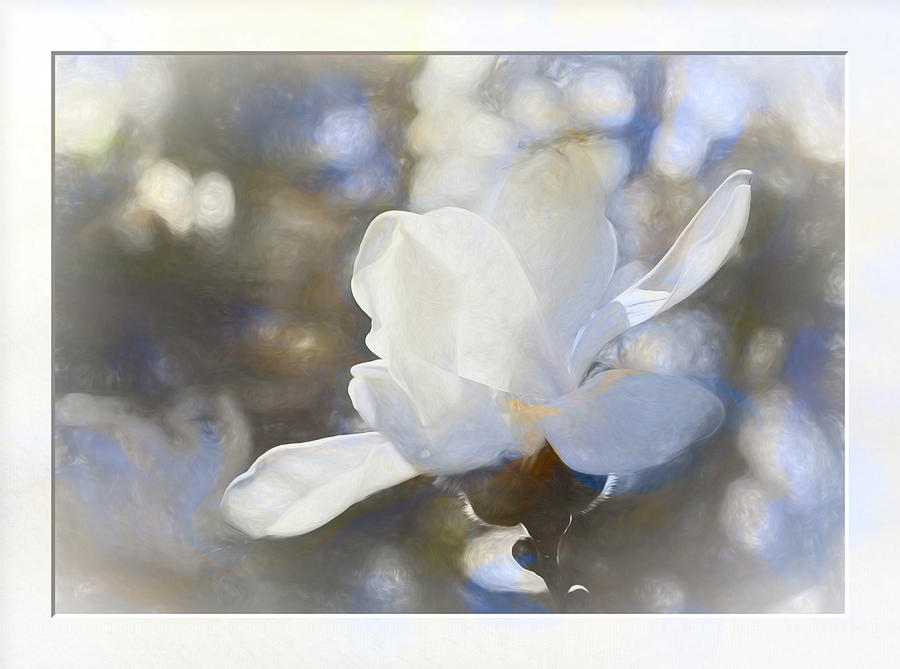 White Magnolia flower blossom in the sunlight by Natalie Rotman Cote