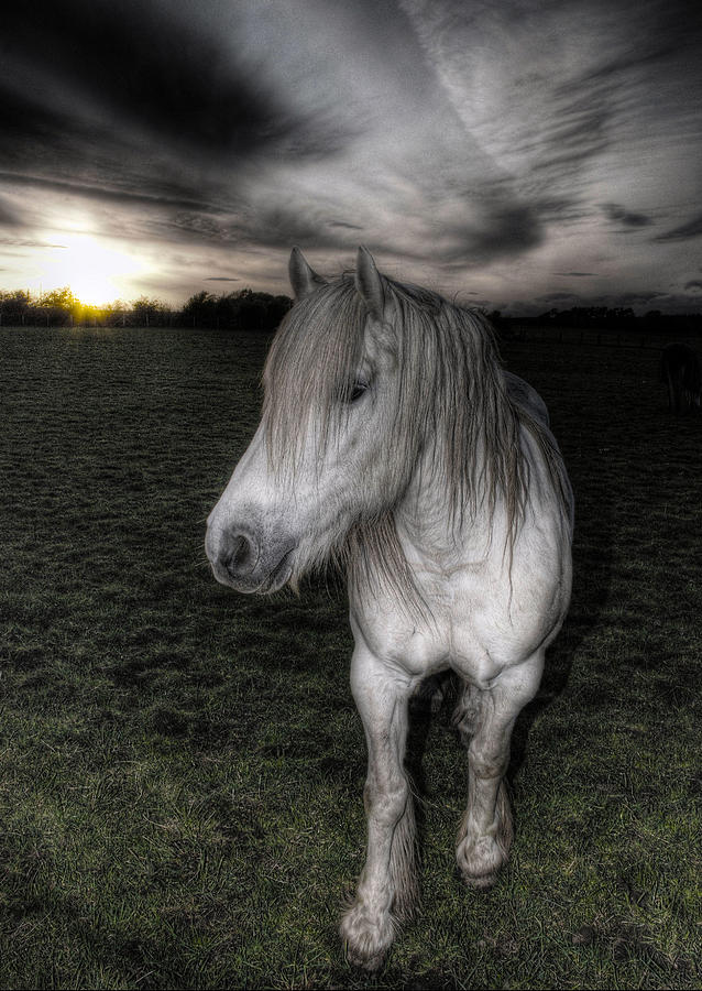 Horse Photograph - White Night by Fraser Davidson