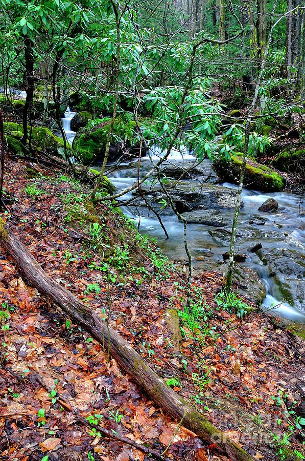 West Virginia Photograph - White Oak Run In Spring by Thomas R Fletcher