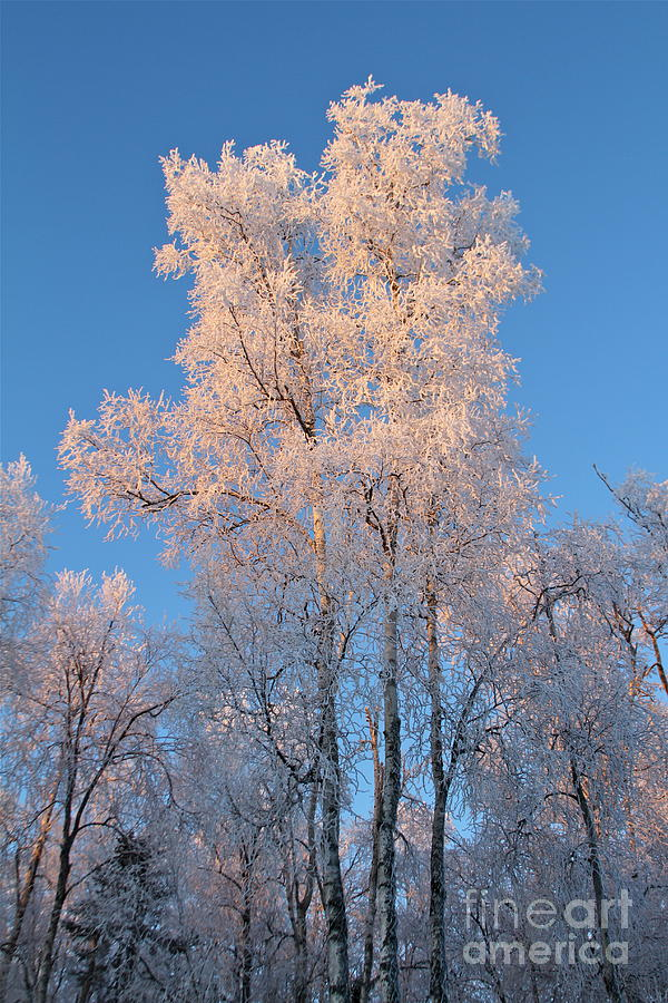 Ice Photograph - White On Blue by Rick  Monyahan