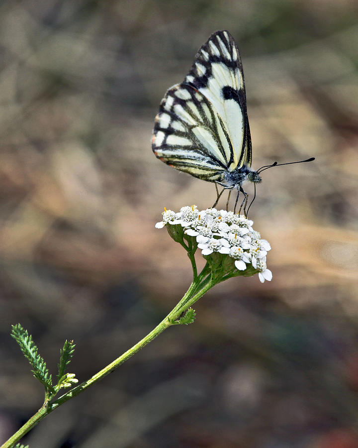 Nature Photograph - White On White by James Steele