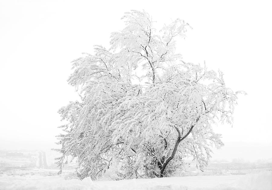 Snow Photograph - White On White by Marilyn Hunt