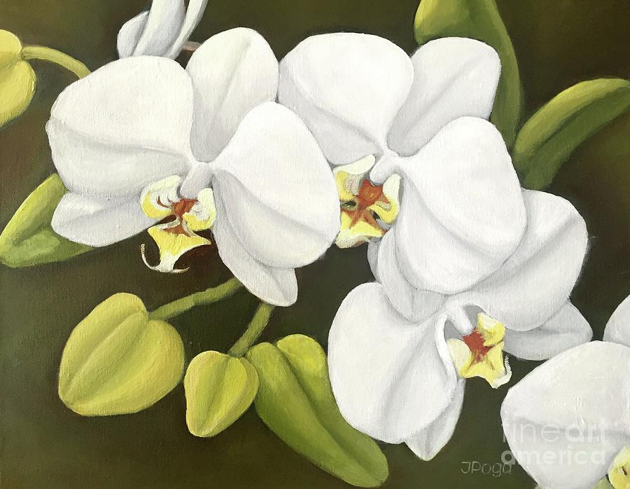 White orchids by Inese Poga