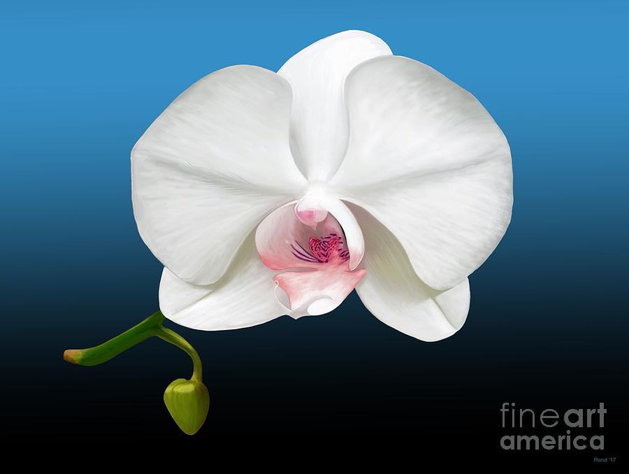 White Orchid by Rand Herron