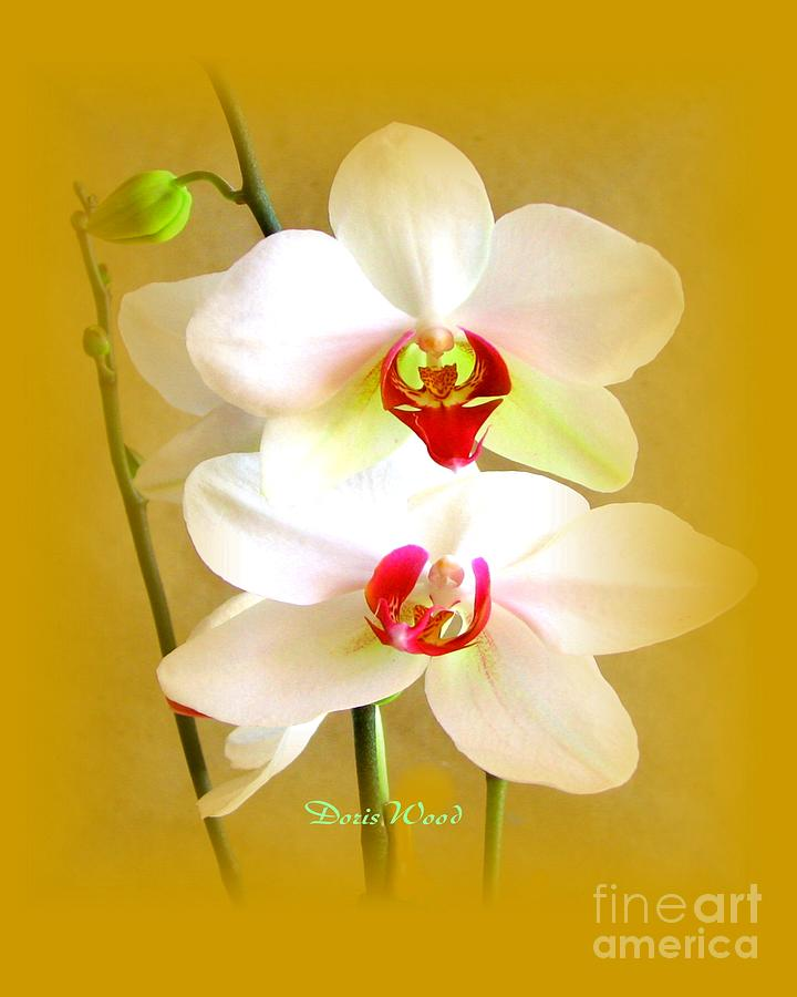 White Orchids Photograph by Doris Wood